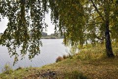 Árboles de abedul por el lago en un día nublado del otoño Fotografía de archivo