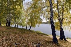 Árboles de abedul por el lago en un día nublado del otoño Foto de archivo libre de regalías