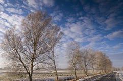 Árboles de abedul que alinean el camino Fotografía de archivo