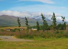 Árboles de abedul que doblan en fuerte viento en campo y cabañas verdes adentro Foto de archivo libre de regalías