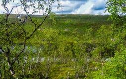 Árboles de abedul y Mountain View en Noruega Foto de archivo libre de regalías