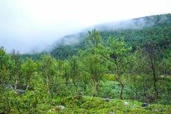Árboles de abedul y Mountain View en Noruega Fotos de archivo libres de regalías