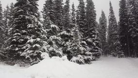 Árboles de abetos grandes de la nieve invierno, Louise Lake, Alberta Canada almacen de video