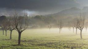 Árboles de almendra en la niebla en la salida del sol imágenes de archivo libres de regalías
