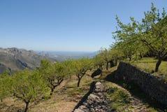 Árboles de almendra en las terrazas de la montaña, España foto de archivo libre de regalías