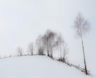 Árboles de Aspen en invierno Foto de archivo libre de regalías