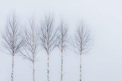 Árboles de Aspen en invierno Imágenes de archivo libres de regalías