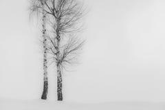 Árboles de Aspen en invierno Imagenes de archivo
