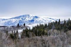 Árboles de Aspen en picos de montaña de Wasatch en Utah septentrional en el invierno Imagenes de archivo