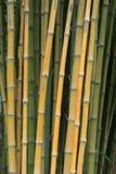 Árboles de bambú Fotos de archivo libres de regalías