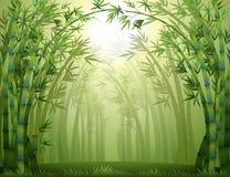 Árboles de bambú dentro del bosque Fotografía de archivo