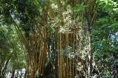 Árboles de bambú en el parque fotos de archivo libres de regalías