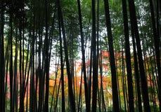 Árboles de bambú silueteados Imágenes de archivo libres de regalías
