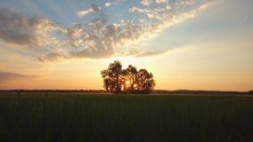 Árboles de Behing de la puesta del sol fotos de archivo