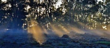 Árboles de Bluegum… Foto de archivo libre de regalías