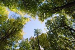 Árboles de Bottom Up en bosque del verano tardío Imagen de archivo
