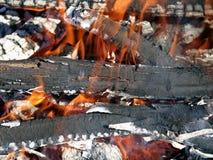 Árboles de Burnining Imágenes de archivo libres de regalías