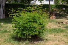 Árboles de Bush Fotografía de archivo libre de regalías