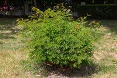 Árboles de Bush Fotografía de archivo