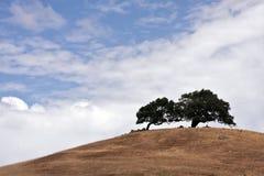 Árboles de California del valle de Sonoma Imagen de archivo libre de regalías