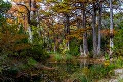 Árboles de Chipre en la cala de Hamilton Foto de archivo