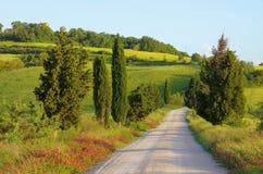 Árboles de ciprés de Toscana con la pista Fotos de archivo libres de regalías