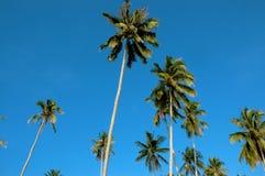 Árboles de coco fotografía de archivo libre de regalías