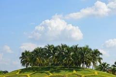 Árboles de coco Fotos de archivo libres de regalías