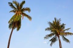 Árboles de coco Fotos de archivo