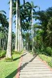 Árboles de coco altos y alineados en un parque Fotografía de archivo libre de regalías