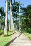 Árboles de coco altos y alineados en un parque Fotografía de archivo