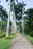 Árboles de coco altos y alineados en un parque Imagenes de archivo