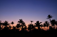 Árboles de coco con el fondo crepuscular Imagenes de archivo