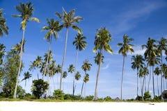 Árboles de coco de la isla Imagen de archivo