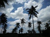 Árboles de coco debajo de un cielo nublado imágenes de archivo libres de regalías