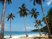 Árboles de coco en Angthong NP, Tailandia Imagen de archivo