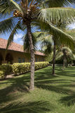 Árboles de coco en el centro turístico foto de archivo libre de regalías