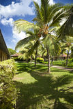 Árboles de coco en el centro turístico imágenes de archivo libres de regalías