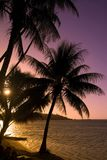 Árboles de coco en el moorea de la puesta del sol Foto de archivo libre de regalías