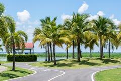 Árboles de coco en el parque Fotos de archivo libres de regalías