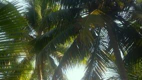 Árboles de coco en invierno Fotografía de archivo