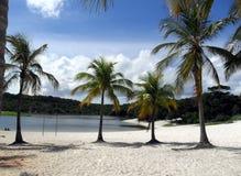 Árboles de coco en la arena de la laguna de Abaeté fotos de archivo