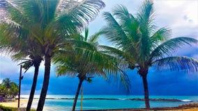 Árboles de coco en la playa imagenes de archivo