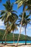 Árboles de coco en la playa Imágenes de archivo libres de regalías