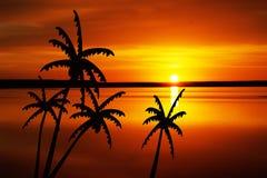 Árboles de coco en la puesta del sol Imagenes de archivo