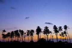 Árboles de coco en silueta fotos de archivo