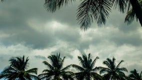 Árboles de coco en un día nublado Fotografía de archivo