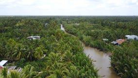 Árboles de coco en Vietnam Fotos de archivo