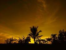 Árboles de coco de la puesta del sol Imagen de archivo