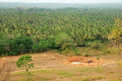 Árboles de coco - paisaje Fotografía de archivo libre de regalías